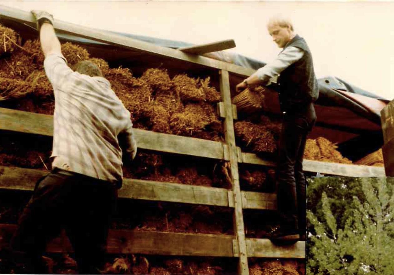 Wincoop Rietdekkers Kwaliteit sinds 1979